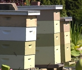 Kiwi Bees for Hire