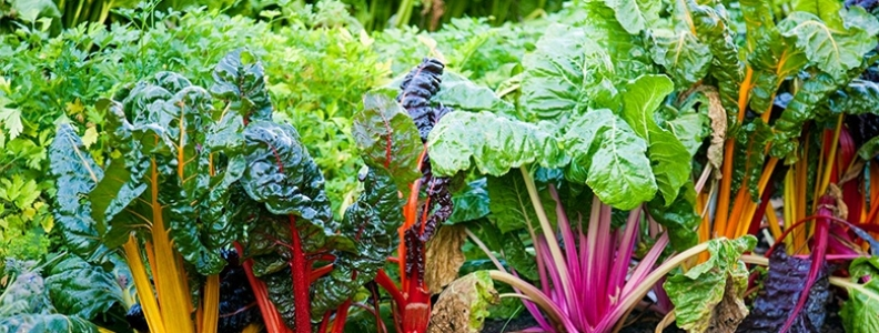 How to Grow Leafy Greens in your Garden