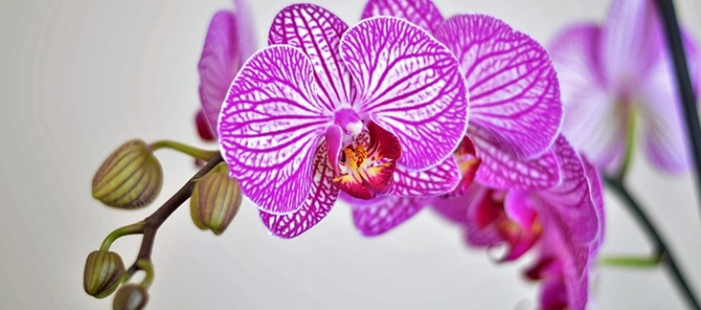 A guide to keeping orchids alive