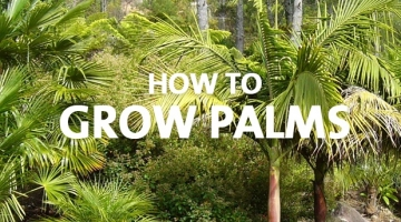 How to Grow Palms