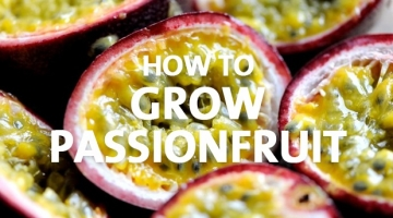 How to Grow Passionfruit