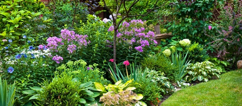 Annuals vs. Perennials – What's the Difference?