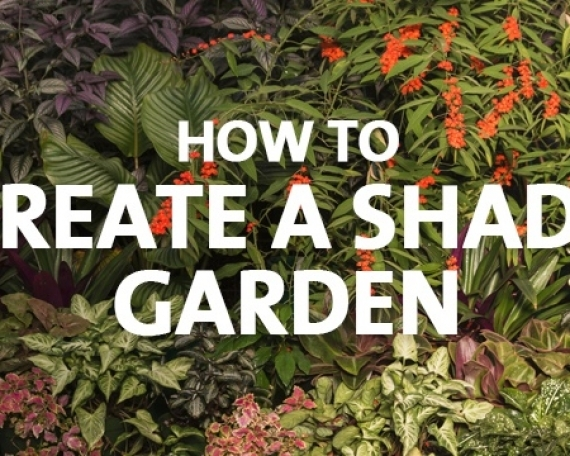 How to Grow a Shade Garden