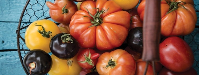 Our Top 9 Tomato Tips