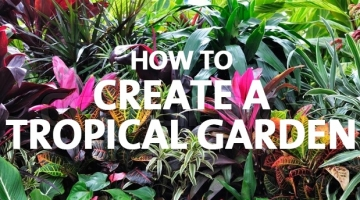 How to Create a Tropical Garden