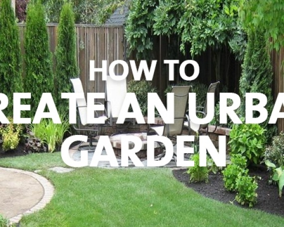 How to Create an Urban Garden