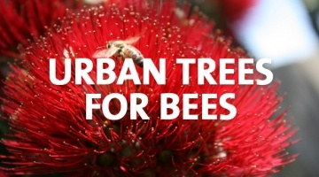 How to Urban Trees for Bees
