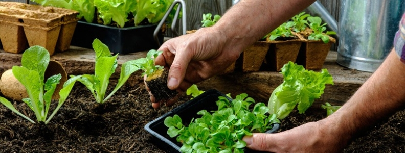 Preparing Your Vegetable Garden For Spring Planting