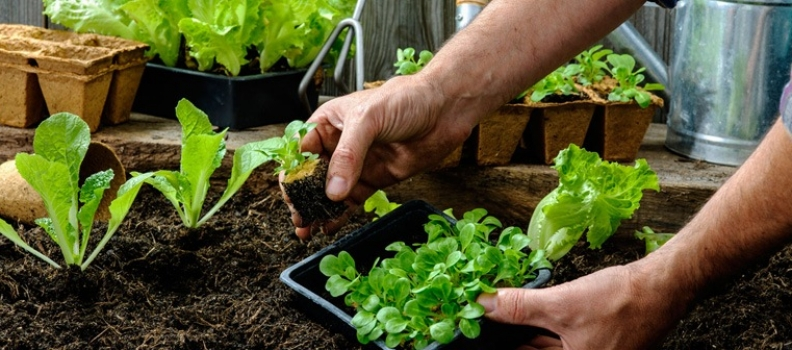 Prep Your Vegetable Garden for Spring