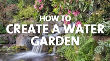 How to Create a Water Garden
