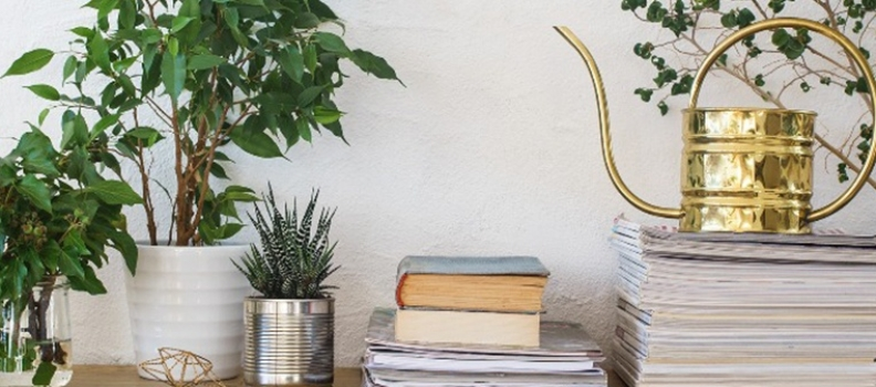 How and When to Water Houseplants