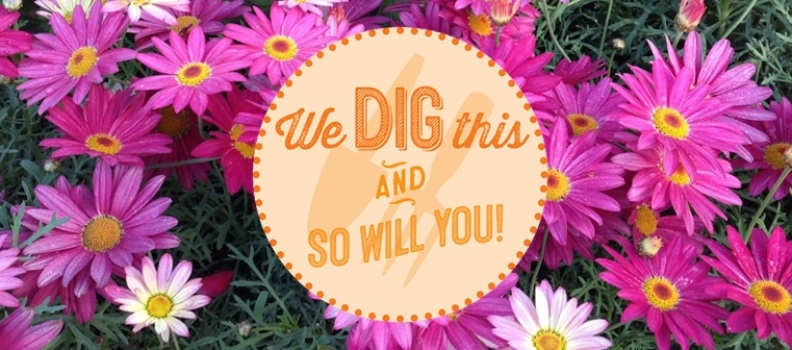We Dig This: Argyranthemum Double Act & Purity