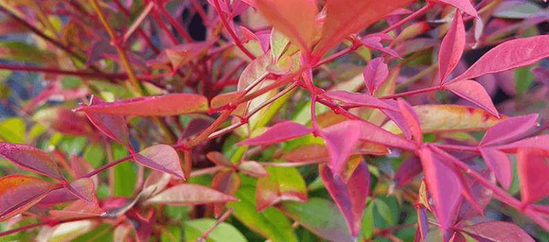 Fabulous Foliage: How to get winter colour into the garden