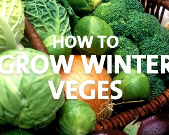 How to Grow Winter Veges