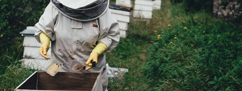 Q & A with a Beekeeper