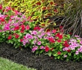 Mulch for Less Work in the Garden