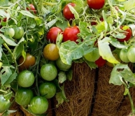 Grow Your Own Hanging Edible Garden